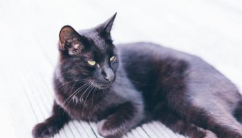 adorable-animal-black-cat-stock-pet-881142